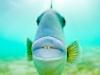 7q7a9209graytriggerfishblueheronbridge2014largevampirekisses11x14