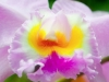 gn3x7391orchid