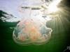 540z0398moon-jellyfisha