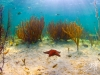 7q7a2136starfishfansseaofabaco2013a