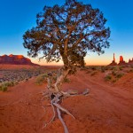 IMG_7658MonumentValleyTree2011